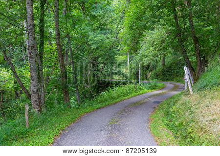 Winding Road Through A Forest In The Pyrenees