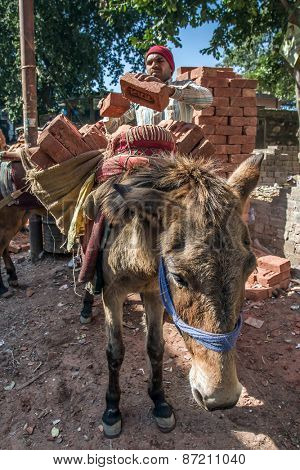 Haridwar, India - November 18, 2012: Unidentificate indian worker loads a donkey with bricks in Haridwar, India