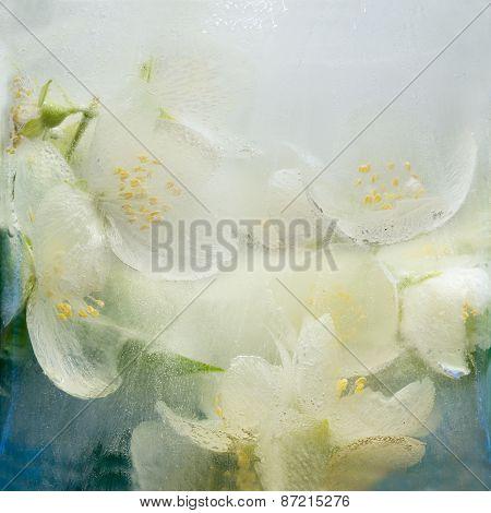 Frozen Flower Of Jessamine
