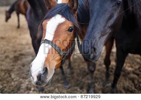 Portrait Of Horses