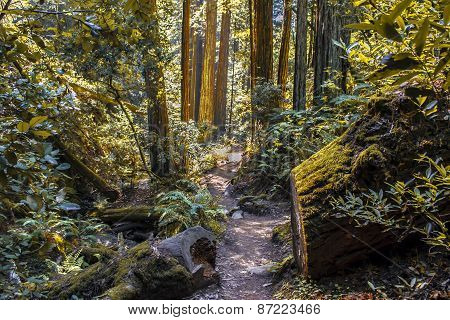 Nature Trail in Northern California