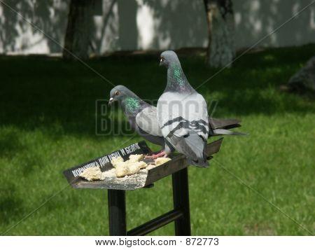 A Feeding-Rack