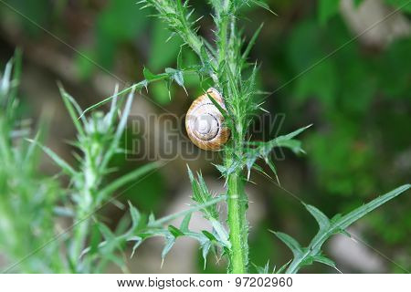 Snail On Prickle