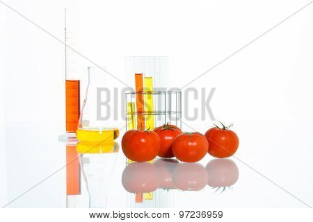 Vegetable Test,  Genetic Modification, Tomato