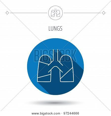 Lungs icon. Transplantation organ sign. Pulmology symbol. Blue flat circle button. Linear icon with shadow. Vector poster