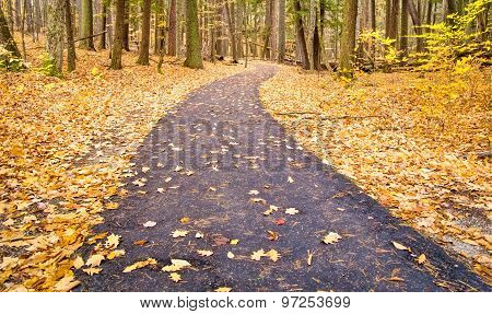 Winding Forest Path