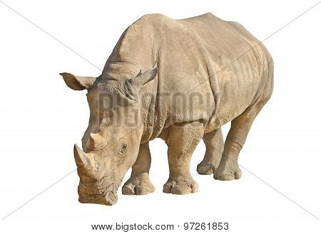 Rhino Isolated On White With Clipping Path