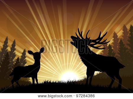 Silhouette a kangaroo and deer