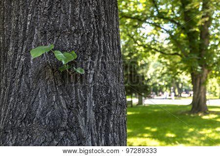Little Plant Growing On Peel Of Tree
