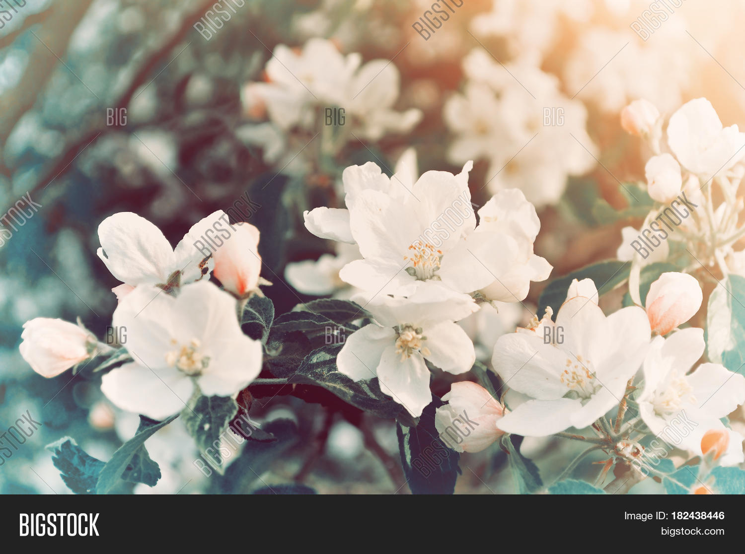 Spring Flowers Image Photo Free Trial Bigstock