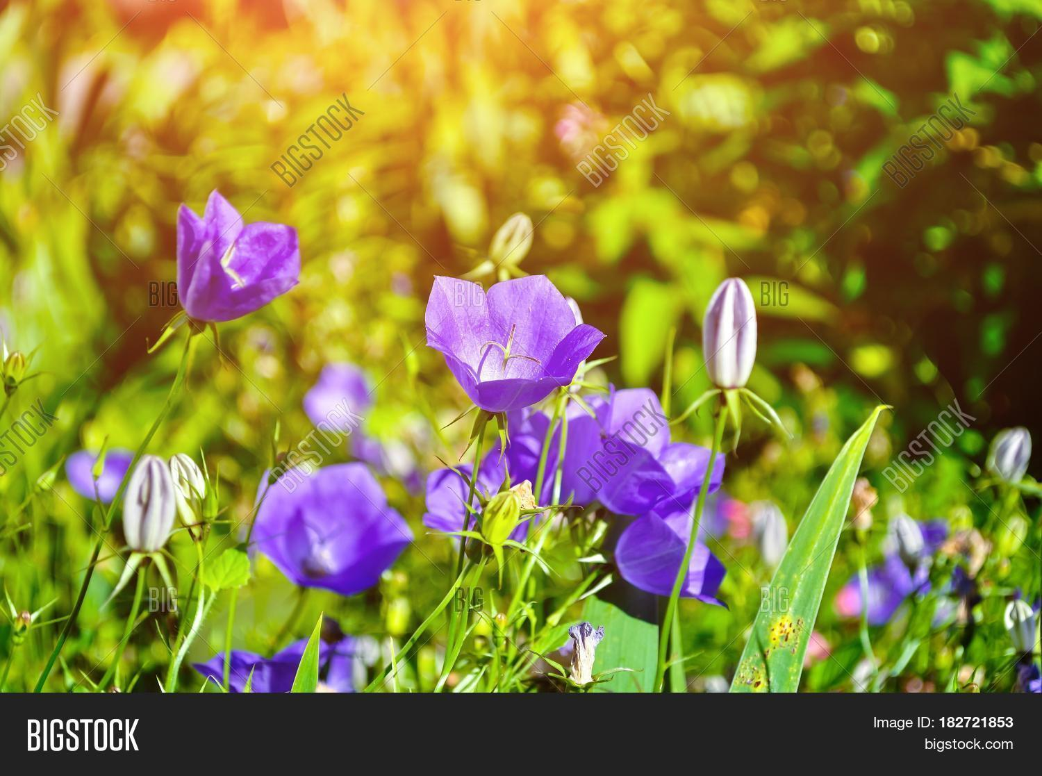 Spring Background Image Photo Free Trial Bigstock