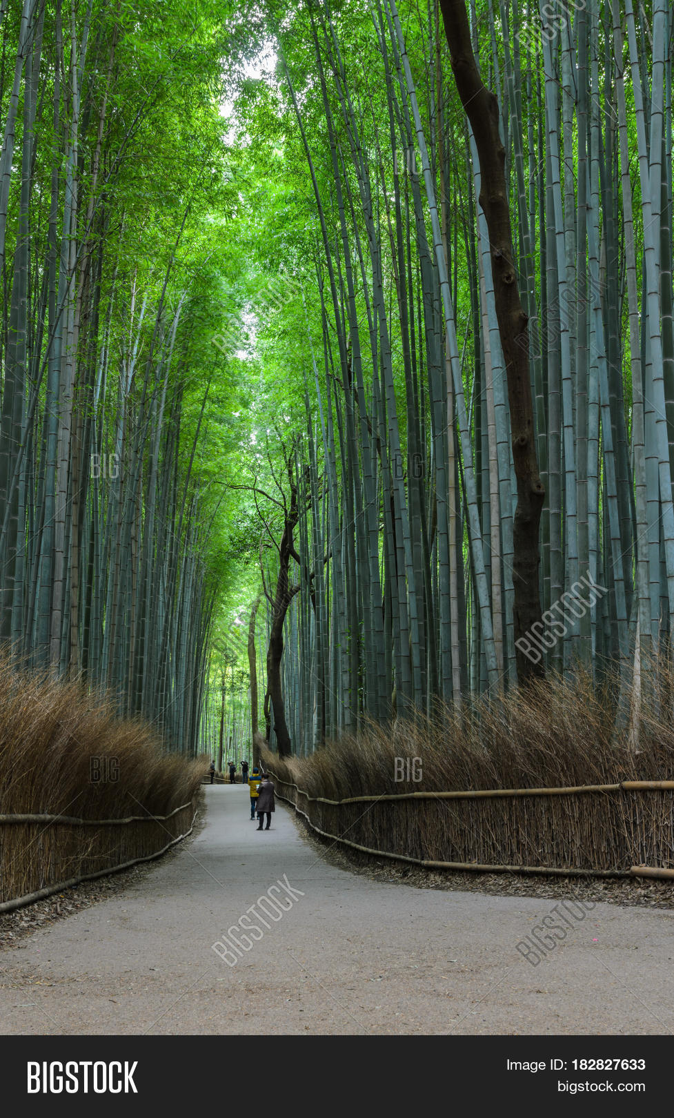 """in a bamboo grove creative re write Specifically creative and critical thinking  having someone rewrite or complete your work  """"in a bamboo grove"""" (305) fri, nov 18."""
