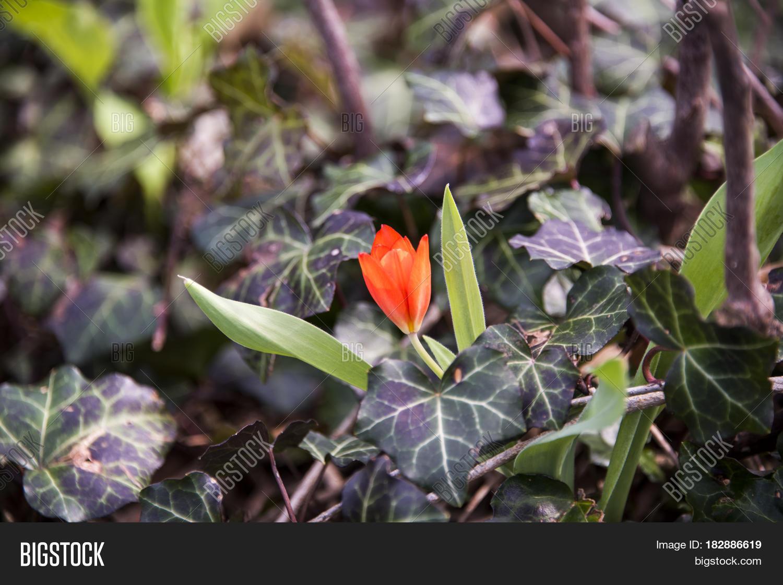 Flowers Spring Image Photo Free Trial Bigstock