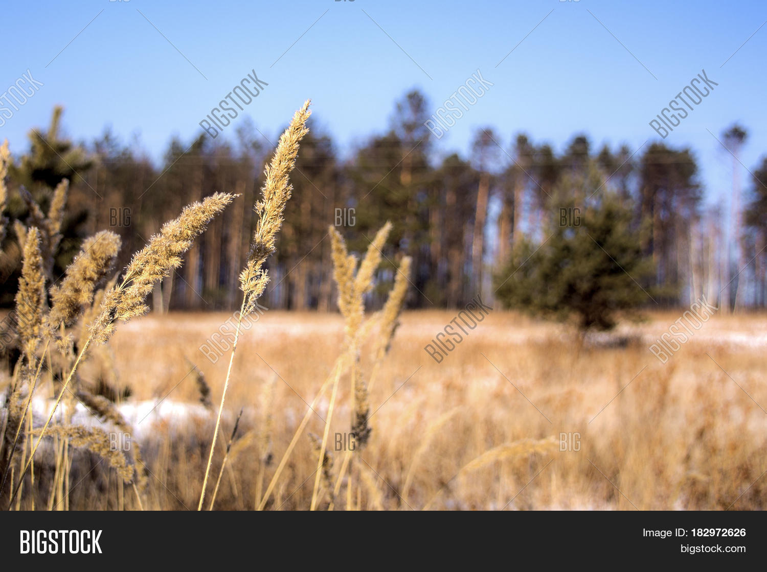 dry grass field background. Many Dry Meadow Flowers In Winter Field. Nature Background. Snowy Field And Plants. Grass Background