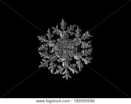 Macro photo of real snowflake: large snow crystal of stellar dendrite type with fine symmetry and complex structure, long, massive arms with side branches and large central hexagon, divided by six sectors. Black and white version. Snowflake isolated on bl