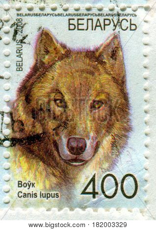 GOMEL, BELARUS, APRIL 15, 2017. Stamp printed in Belarus shows image of  The gray wolf or grey wolf (Canis lupus), also known as the timber wolf or western wolf, circa 2008.