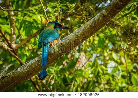 One of the gemstones of birdwatching in Colombia is colorful Andean Motmot