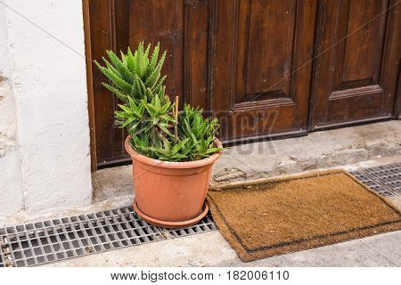 Green potted plants outdoor. Different potted plants and seedlings