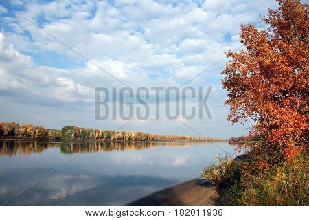 Autumn Forest And River