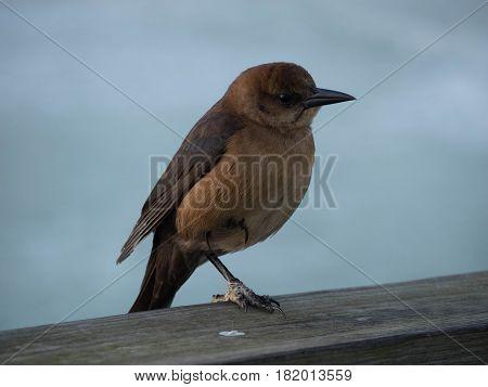 The bird was on the dock at Daytona Beach Florida U.S.A.
