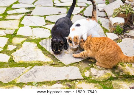 Street cats eating food - Concept of homeless animals.