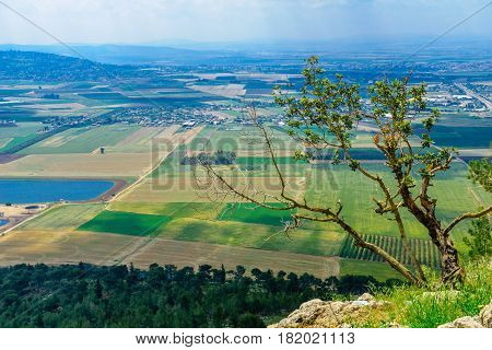 Jezreel Valley Landscape, Viewed From Mount Precipice