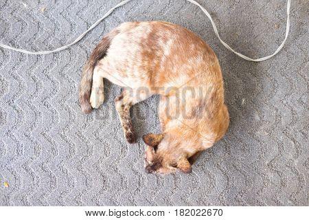 a little cat sleeping on the floor