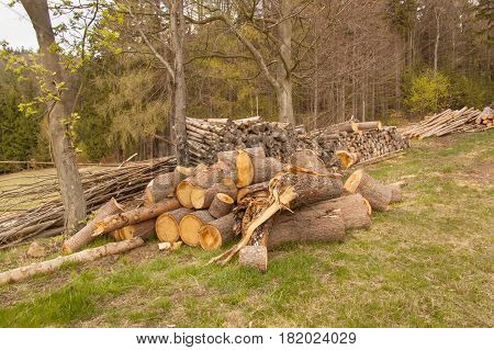 Pile of timber on the forest edge. Working in the forest. Preparing for the winter