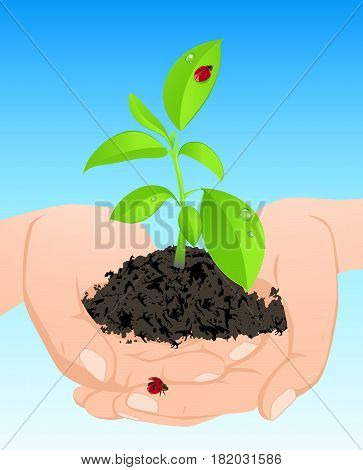 Young green plant and two ladybirds in hands on a blue background. Ecological concept.