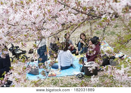 Japanese people sitting on the ground in Hanami festival among cherry blossom sakura in front of Himeji Castle on 15 April 2017
