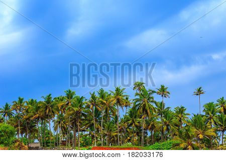 Tropical Landscape With Blue Sky And Palm Trees.