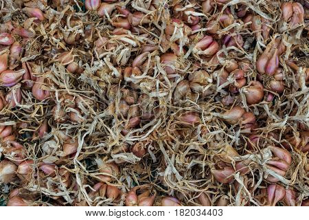 Dry many shallot top view image, Food background.