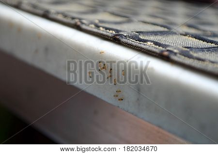 Group of ant at the edge of marble table