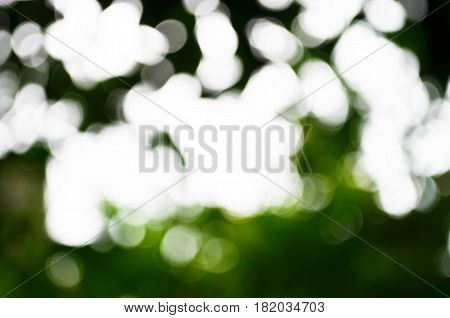 Natural green and white bokeh blackground from tree blurred bokeh