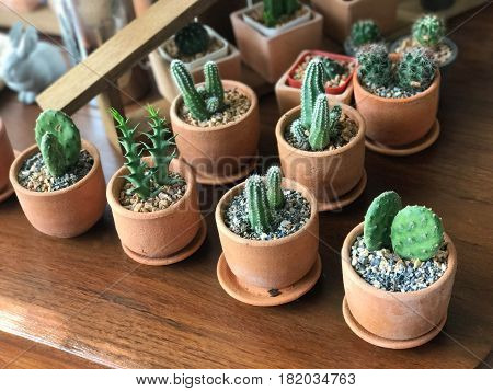 Small cactus in clay pot on wooden table