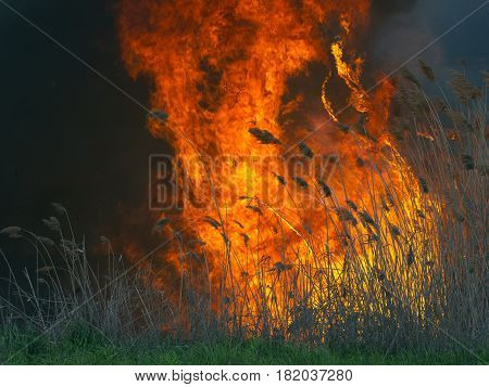 The massive fire with tongues of flame
