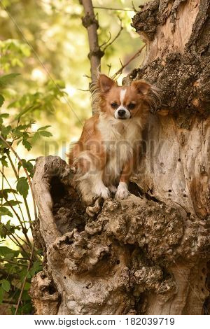 a small Chihuahua dog sits in an odd looking tree