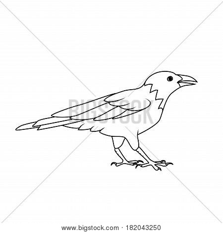 Coloring book: Crow or Raven on a white background
