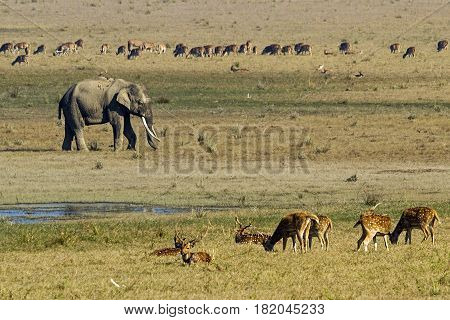 Herbivorous kingdom in Corbett Tiger Reserve in India