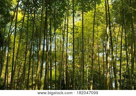 Spring Tall Trees Bamboo Woods. Sunlight In Tropical Forest, Summer Nature. Different Deciduous Trees Summer Background. Nobody. Environment Concept.