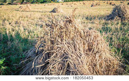 Stack of straw in Prince Edward  Island