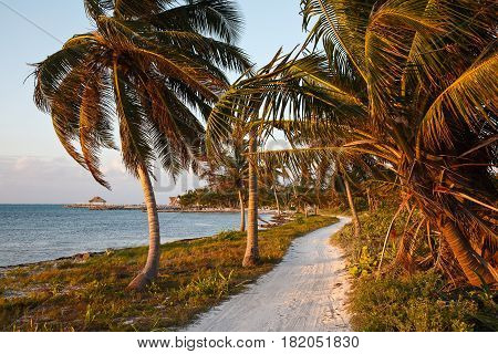 A sandy path along the shore of the Caribbean.