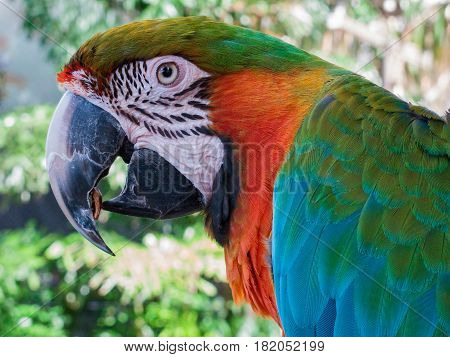 The Macaw is a tropical bird and they can be quite sociable even in the wild.