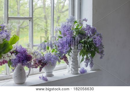 blooming branch of lilac at the window