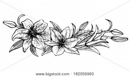 Sketch floral blooming lilies. hand drawn illustration of lily flower. beautiful monochrome black and white lily frame