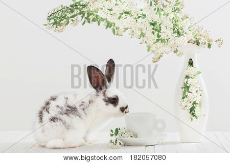 the funny little rabbit with spring flowers