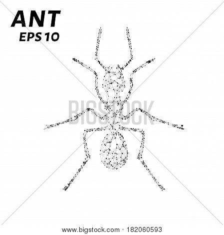The Ant Consists Of Points, Lines And Triangles. The Polygon Shape In The Form Of A Silhouette Of An