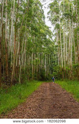 Trekking In Morro Do Gaucho Mountain Landscape
