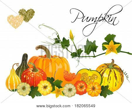 Composition of different pumpkins on a white background