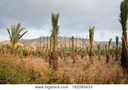 View of the Galilee - cultived fields , Israel .